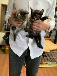 新しい家族  猫二匹