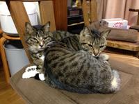思い出いっぱいありがとう  猫りゅうちゃん