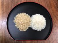 白米と、玄米のタンパク質の違い  玄米ご飯