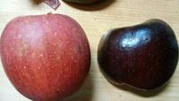 リンゴ林檎りんご 2016/12/13 23:11:54