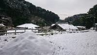 初雪 2016/01/20 13:00:03