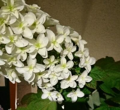 白いお花のお名前は!?