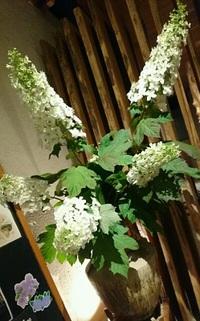 白いお花のお名前は!? 2017/06/10 17:10:00