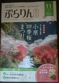 ぶらりん11月号に掲載されています!