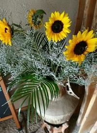 大好きな花 ひまわり♪ 2017/06/26 16:45:00