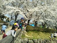 お花見ピクニック&夜桜☆★ 2018/04/04 00:16:28