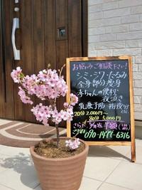 桜でお出迎え♡