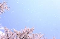風に舞う桜の花びらを見ながら、新年度に思うこと