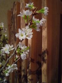 春の食材勢ぞろい! 2012/02/25 17:04:19