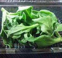 生活習慣病にも効果が期待!新野菜アイスプラント