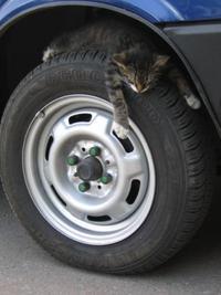 タイヤも点検を・・・(=^・^=)