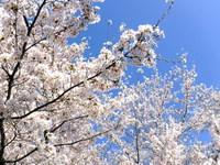 春爛漫!水源公園!