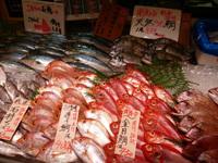 木曽川で魚太郎?!